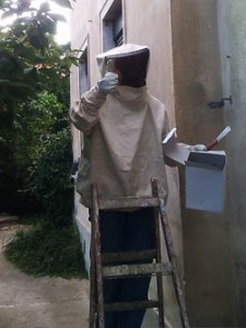wespennest-entfernen münchen